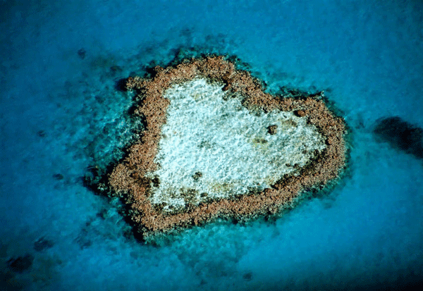 Heart shaped reef in Hardy Reef near Whitsunday Islands, Australia.