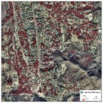 Using Near-Infrared Aerial Imagery to Inventory Oak Trees