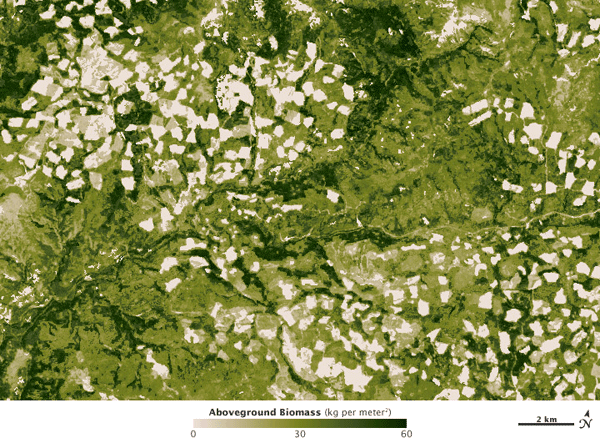 Detail of the Pacific Northwest showing individual forest logging plots.