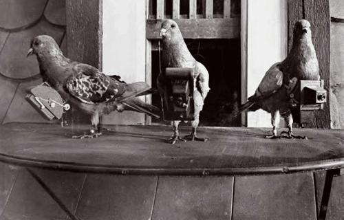 Pigeon-aerial-cameras