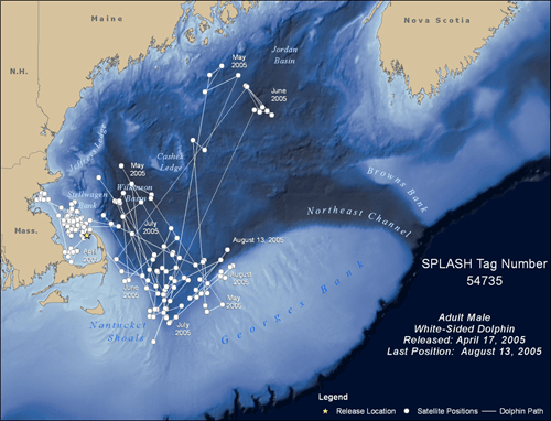 Spatial data derived from the satellite tag of a white-sided dolphin.
