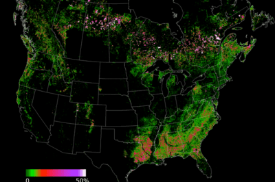 Landsat-derived forest disturbance rate (stand replacing), 1990-2000, aggregated to 500m grid. Source: NASA.
