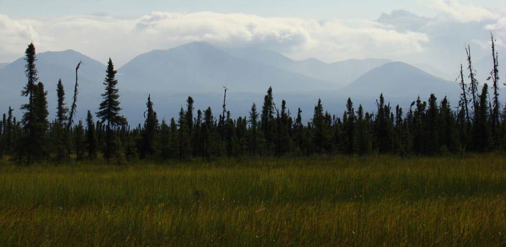 Thawing peatlands in Alaska. Photo: Miriam Jones, U.S. Geological Survey. Public domain.