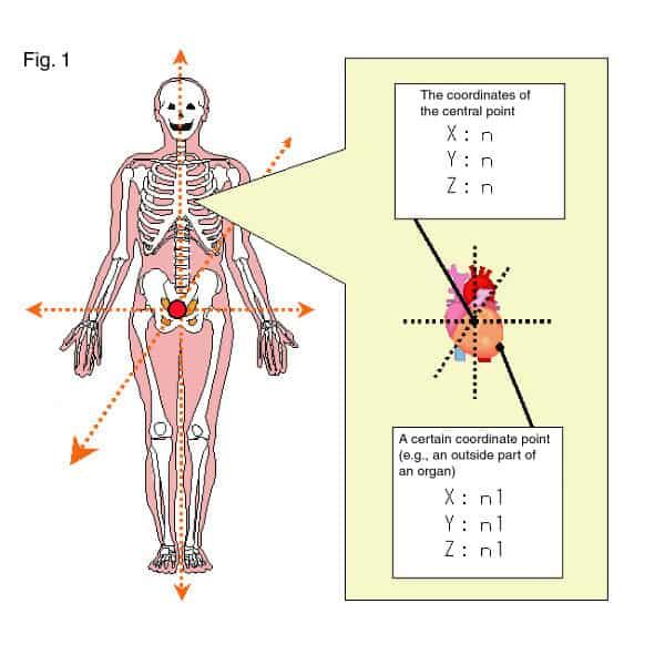 Gis And Human Anatomy Gis Lounge