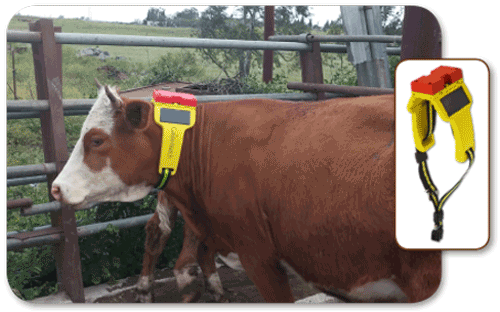 Monitoring Livestock Using Gis Gis Lounge