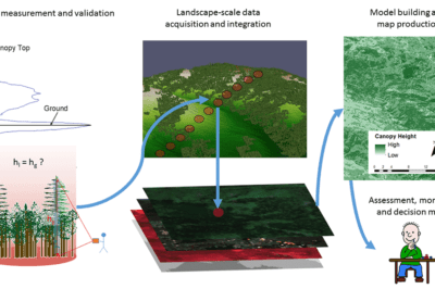 The Ecosystem Demography model (ED) provides estimates of carbon stocks and fluxes over large areas at fine resolution. Source: GEDI products page