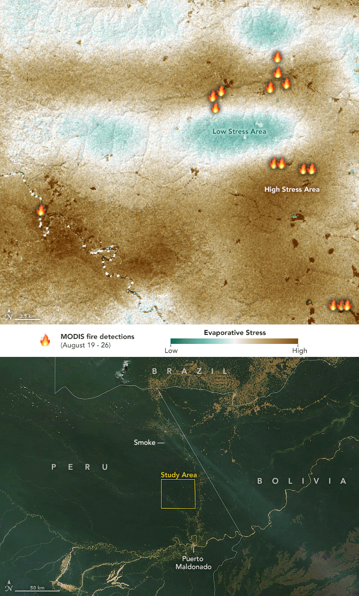 Map showing the evaporative stress in part of the study area in the western Amazon rainforest as measured by ECOSTRESS from August 19-26, 2019. Image/map: Lauren Dauphin, using MODIS data from NASA EOSDIS/LANCE and GIBS/Worldview and evaporative stress data from the ECOSTRESS team.