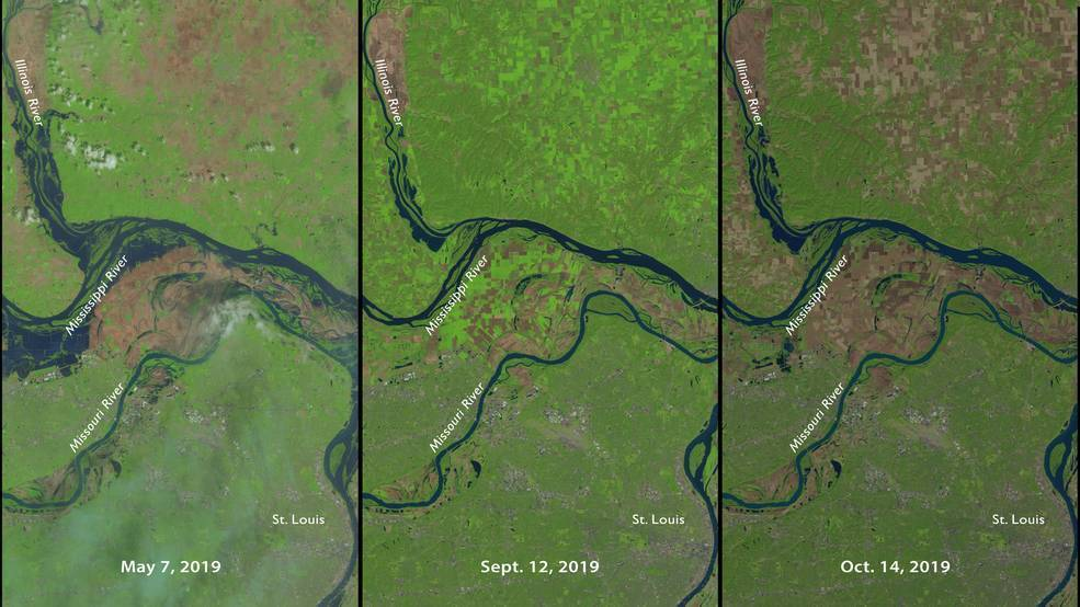 This series of Landsat imagery shows how remote sensing can help monitor crop output. These images show a farming area north of St. Louis, Missouri. In May, planting was delayed by heavy rains. The image from September shows growing crops in bright green with bare fields in brown. By October, the light brown areas are harvested fields while the darker brown areas are fields that lay fallow all summer. Images: NASA, public domain.