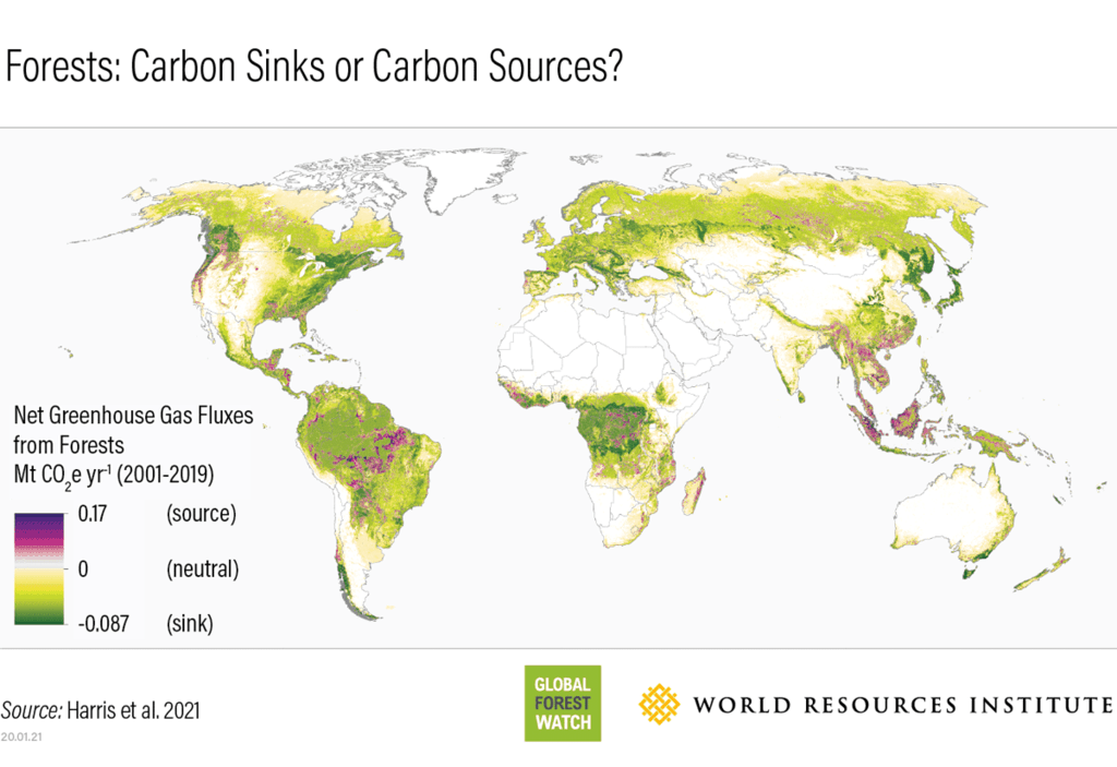 World map showing forested regions that are sources of carbon emissions (purple) and where they are carbon sinks (green). Credit: Harris et al. 2021 / Global Forest Watch / World Resources Institute
